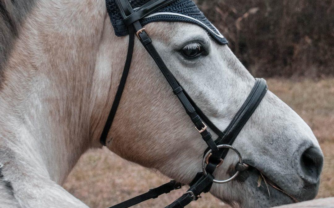 L'entrainement du jeune cheval